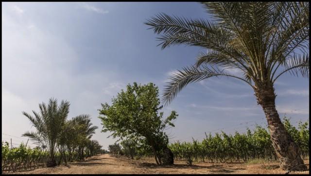 10_EGYPTHE_Panorama-sans-titre1_EDT-1024x581