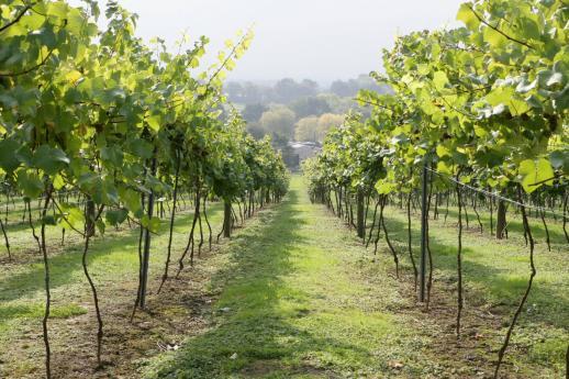 The Bolney Wine Estate