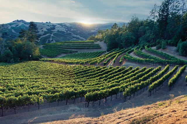 Jackson Family Wines' Vérité Estate in the Alexander Valley