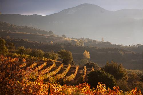 Remelluri's vineyards