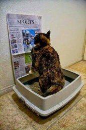 Cat pee