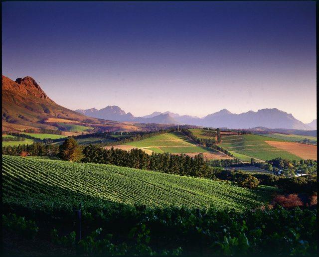 The-stunning-landscape-at-Warwick-Wine-Estate